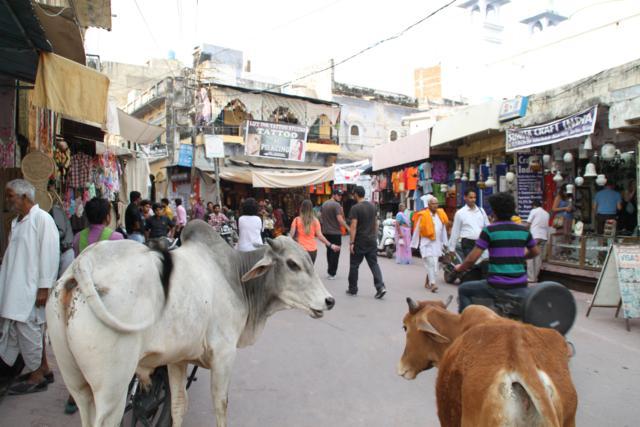 Pushkar, la Ciudad Sagrada